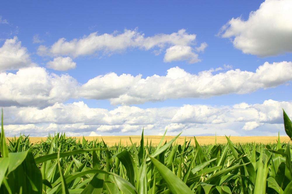 campo verde con cielo blu e nuvole